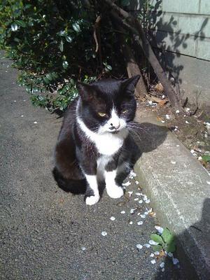 cat0414.jpg