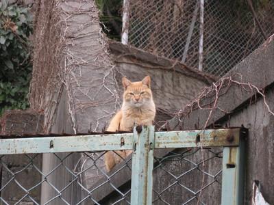 cat100214.JPG